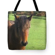 Pony On The Moors Tote Bag