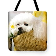 Poodle In Pouch Tote Bag