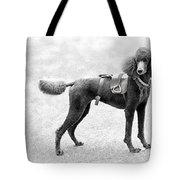 Poodle Jockey Triptych Tote Bag