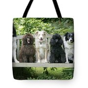 Poodles And Other Dogs On A Bench Tote Bag