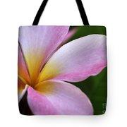 Pop Of Pink Plumeria Tote Bag
