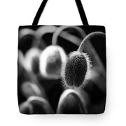 Poppies In Waiting Tote Bag
