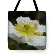 Poppy Adoration Tote Bag