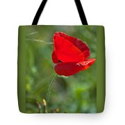 Poppy Blowing In The Wind Tote Bag