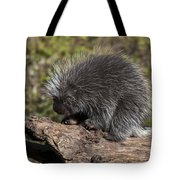 Porcupine Looking For Food Tote Bag