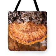 Poria Shelf Fungi 1 Tote Bag