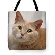 Portrait - Orange Tabby Cat Tote Bag