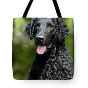 Portrait Black Curly Coated Retriever Dog Tote Bag