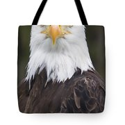 Portrait Of A Bald Eagle In Gaspesie Tote Bag