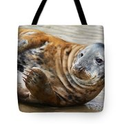 Portrait Of A Common Seal  Tote Bag