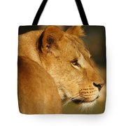 Portrait Of A Dreamy Lioness  Tote Bag