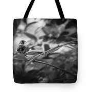 Portrait Of A Finch Tote Bag