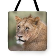 Portrait Of A Lioness, Panthera Leo Tote Bag