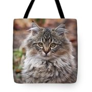 Portrait Of A Maine Coon Kitten Tote Bag