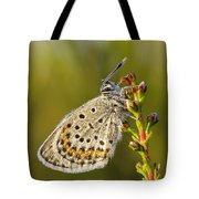 Portrait Of A Morning Dew Butterfly Tote Bag