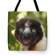 portrait of a sifaka from Madagascar Tote Bag