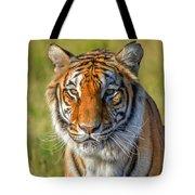 Portrait Of A Tiger Tote Bag