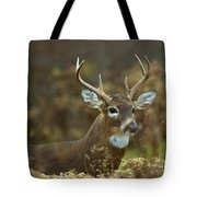 Portrait Of A White Tailed Buck Tote Bag