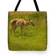 Portrait Of A Young Pronghorn Tote Bag