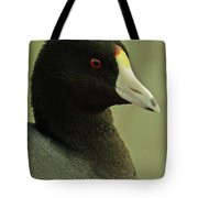 Portrait Of An American Coot Tote Bag