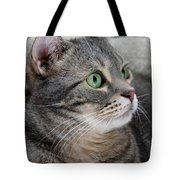 Portrait Of An Ameriican Shorthair Cat Tote Bag