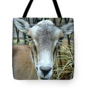 Portrait Of Mouflon Ewe Tote Bag