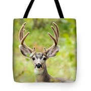 Portrait Of Mule Deer Buck With Velvet Antler  Tote Bag