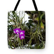 Portrait Of Orchids Tote Bag