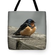 Posing Barn Swallow Tote Bag