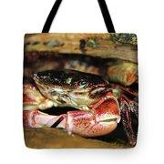 Posing Crab Tote Bag