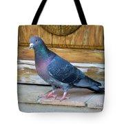 Posing Pigeon  Tote Bag