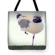 Posing Seagull Tote Bag