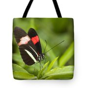 Postman Butterfly On Green Tote Bag
