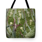 Potato Leaf Sem Tote Bag