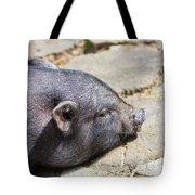 Potbelly Pig Tote Bag
