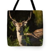Powderham Deer  Tote Bag