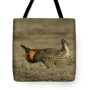 Prairie Chicken-9 Tote Bag by Thomas Young