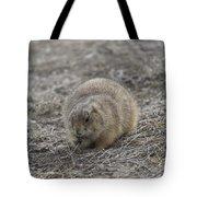 Prairie Dog Lunch Tote Bag