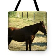 Prarie Stallion In The Shade Tote Bag by Barbara Griffin