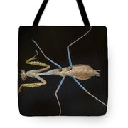 Praying Mantis 4 Tote Bag