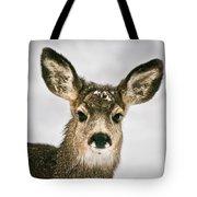 Precious - Mule Deer Fawn - Casper Mountain - Casper Wyoming Tote Bag