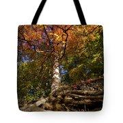 Preserve Trails In Fall Six Tote Bag