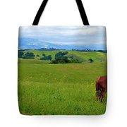 Pretty Horse Grazing In Rolling Hills Tote Bag