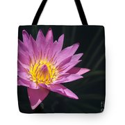 Pretty Pink And Yellow Water Lily Tote Bag