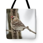 Pretty Redpoll Tote Bag