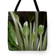 Primeroses Steam And Buds Tote Bag