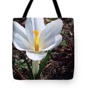 Pristine White Crocus Tote Bag