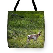 Pronghorn Antelope Among Wildflowers Tote Bag