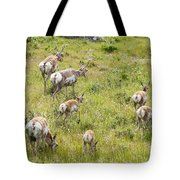 Pronghorn Antelope In Lamar Valley Tote Bag