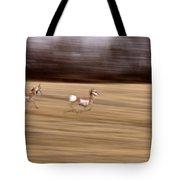 Pronghorn Antelope Tote Bag